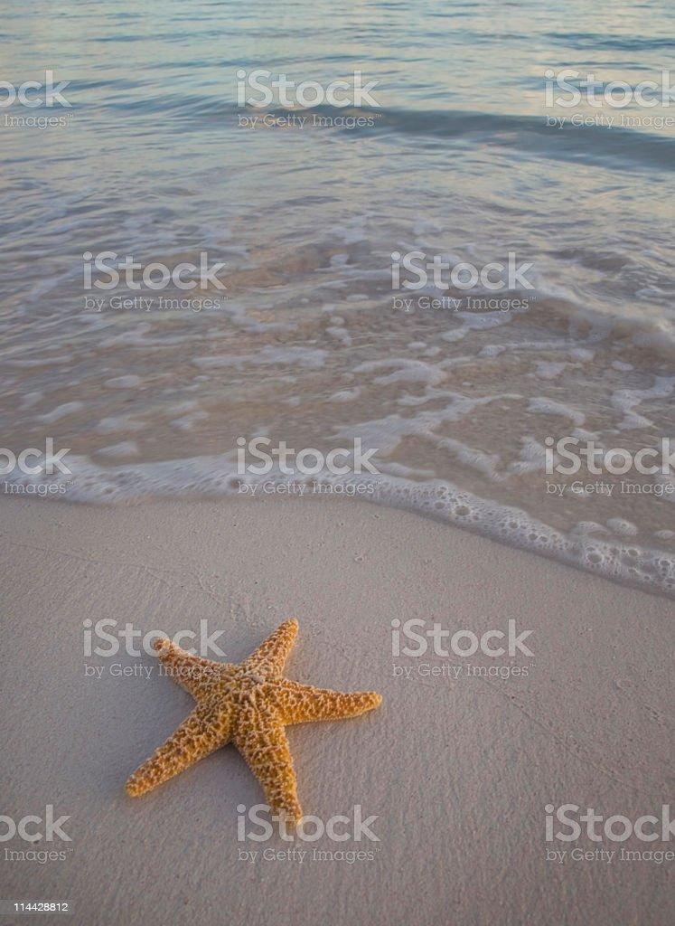 Starfish in the beach royalty-free stock photo