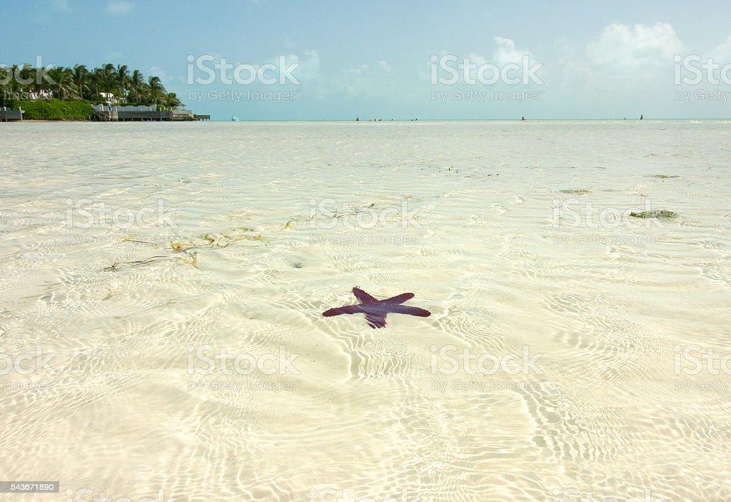 Starfish in the Caribbean Sea stock photo