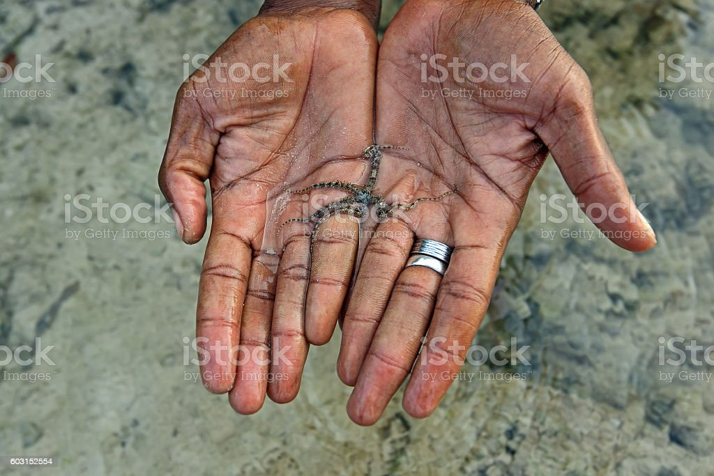 Starfish in the palms stock photo