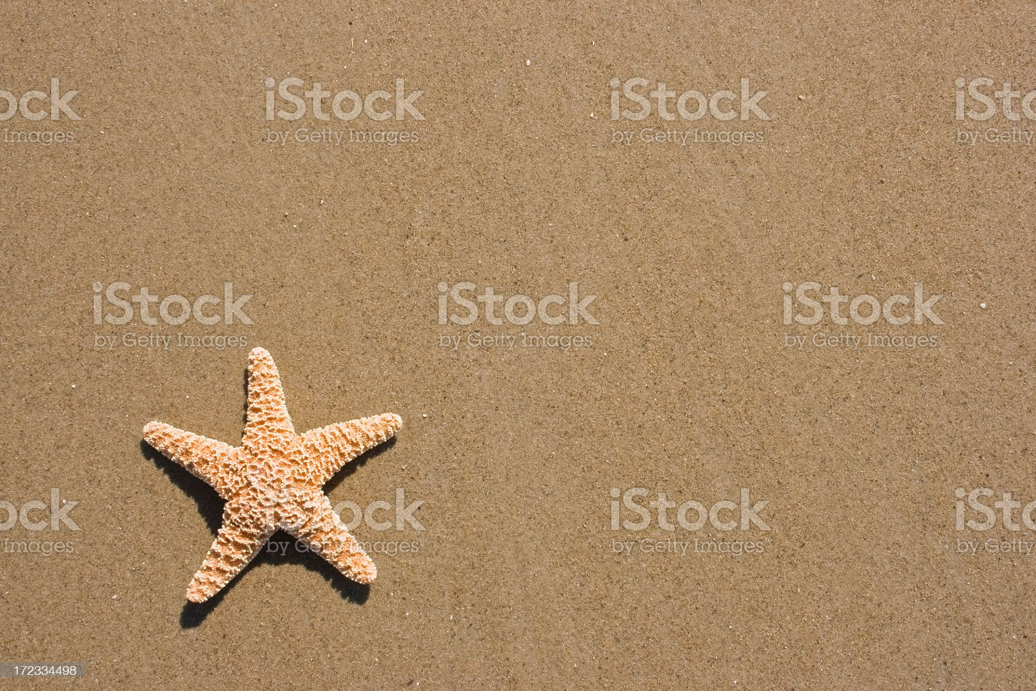Starfish isolated on sandy beach royalty-free stock photo