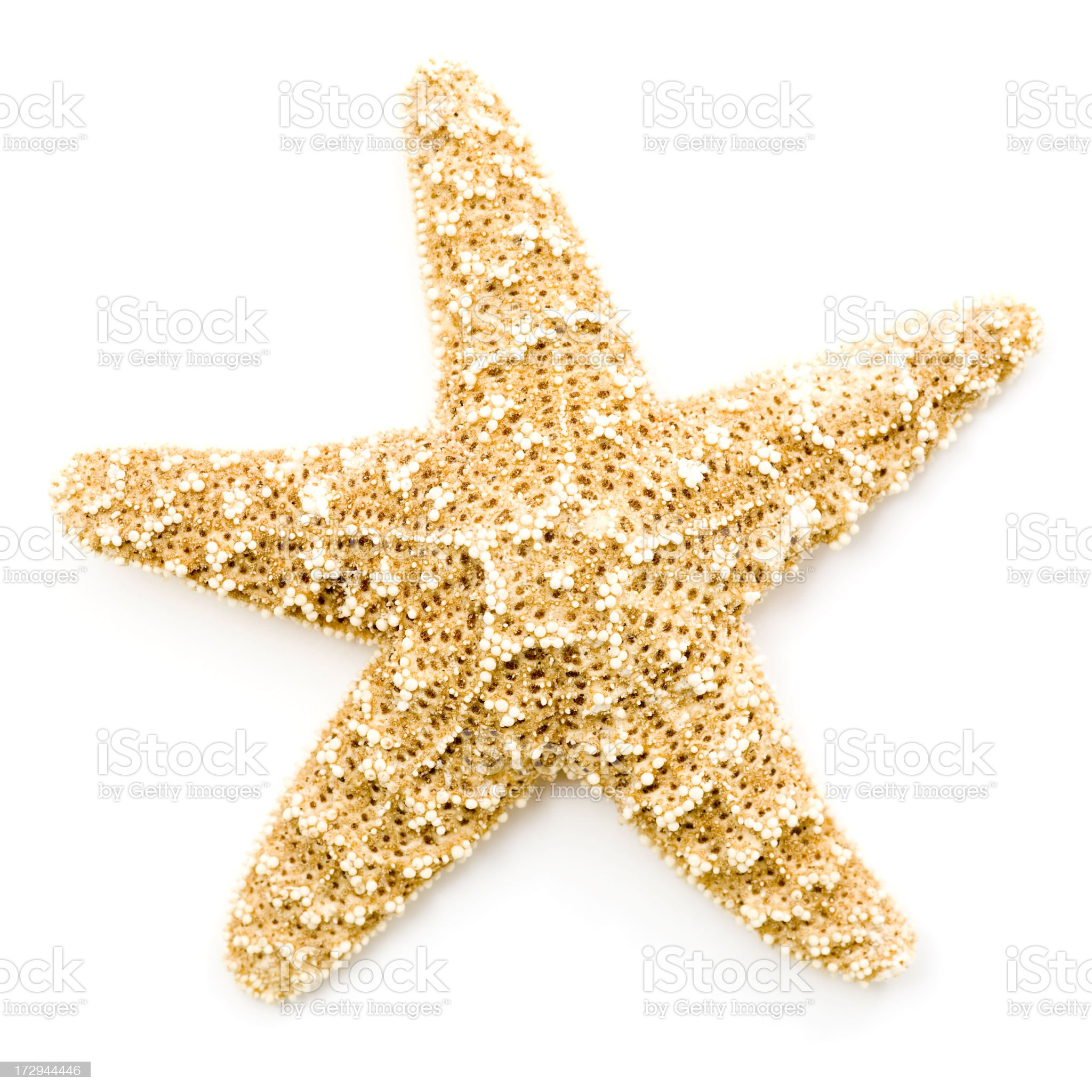 Starfish Isolated on White Background royalty-free stock photo