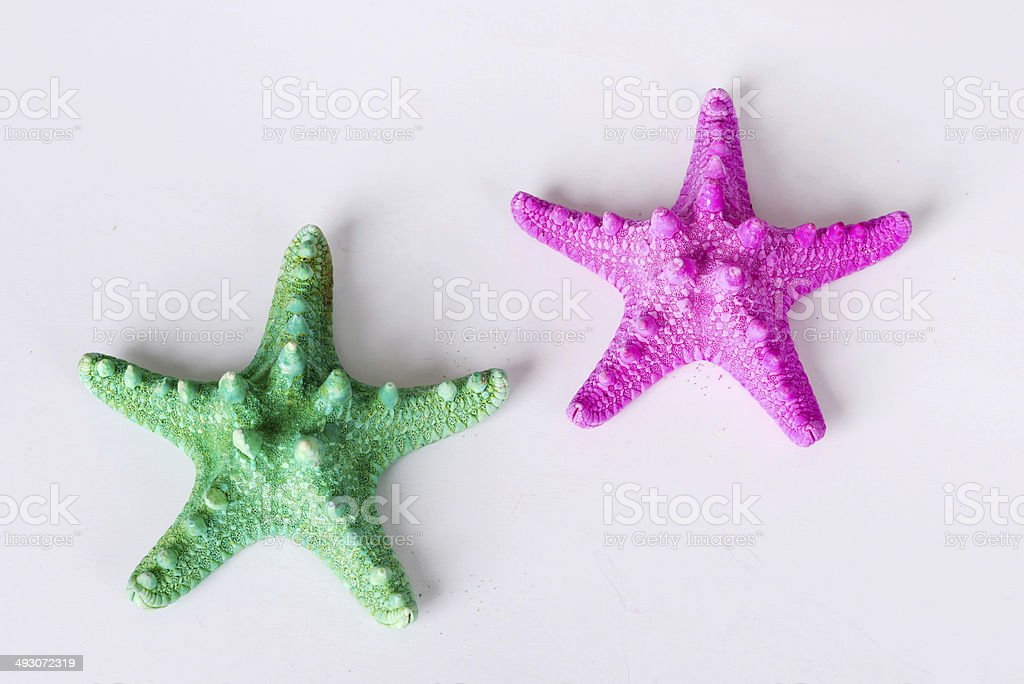 Starfish isolated on white background. Sea stars and shells stock photo