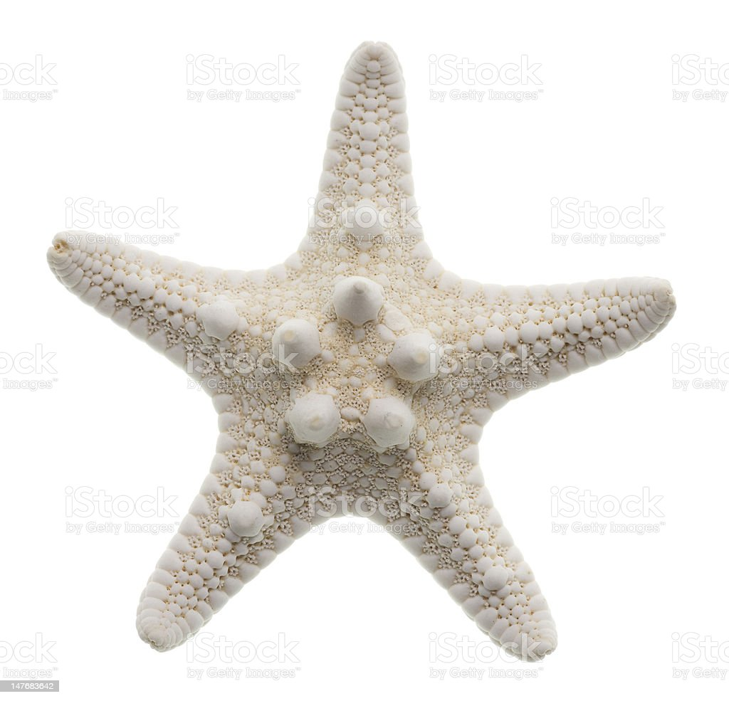 Starfish isolated on white royalty-free stock photo