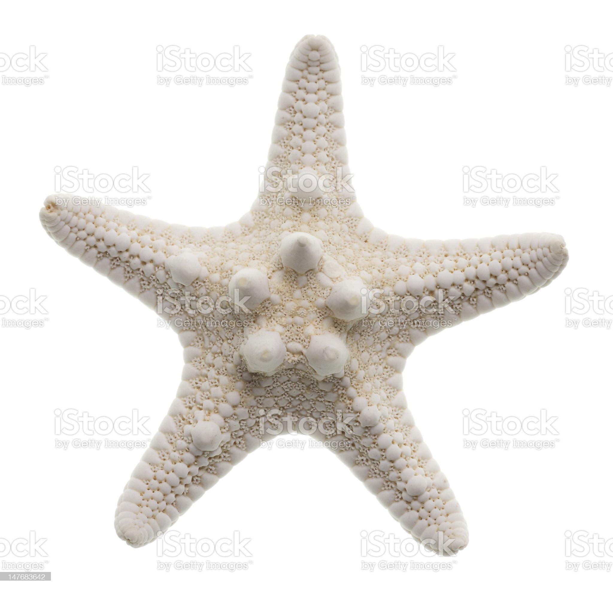 Starfish isolated on white royalty-free stock photo