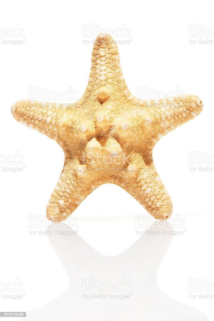Starfish isolated on white stock photo