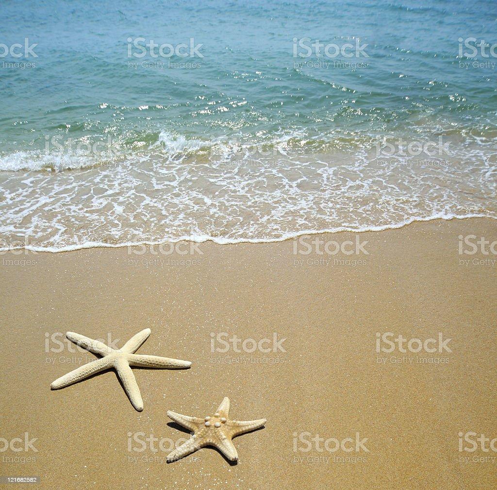 Starfish laying on beach sand next to oncoming shore stock photo