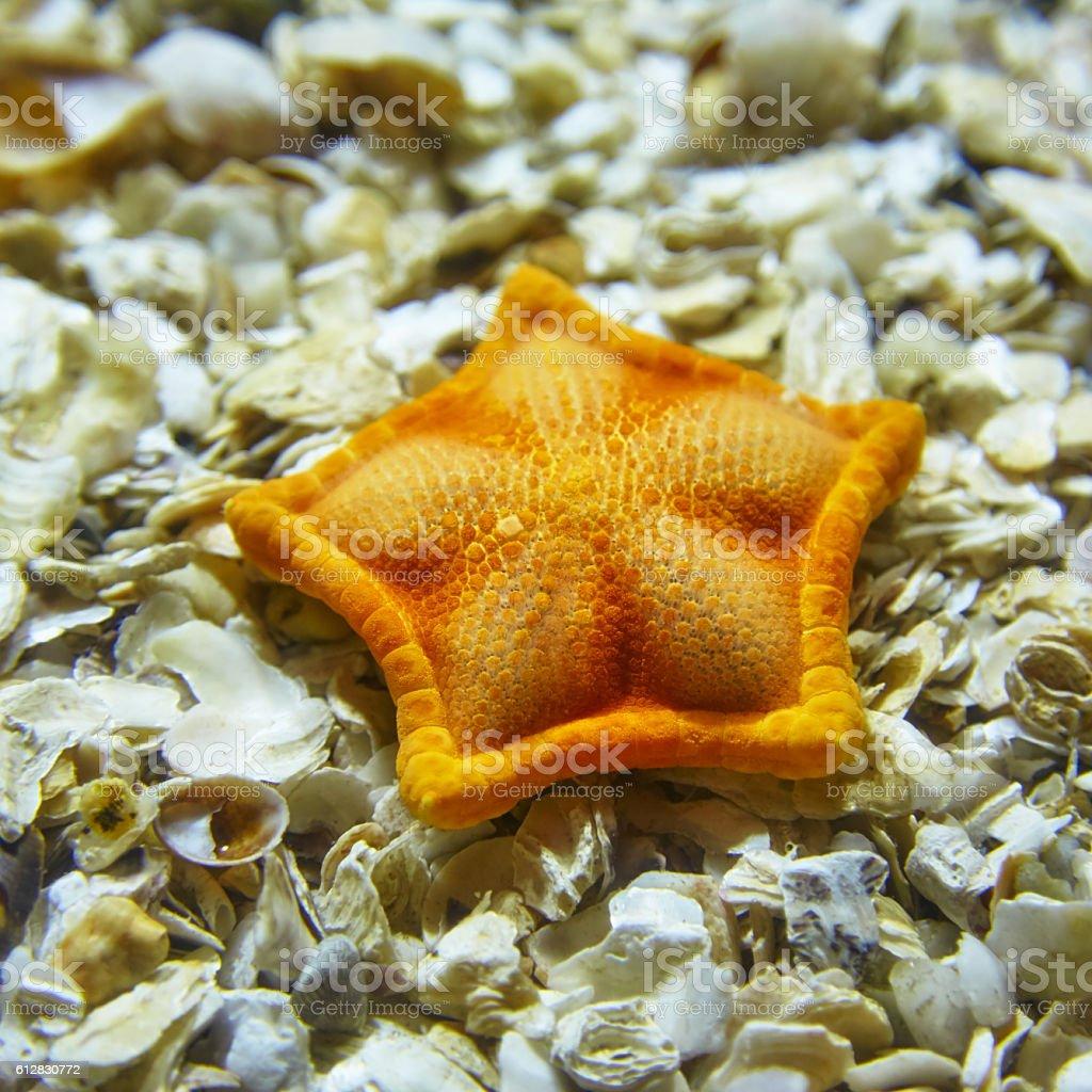 A starfish lying on shells in the Istanbul aquarium. stock photo