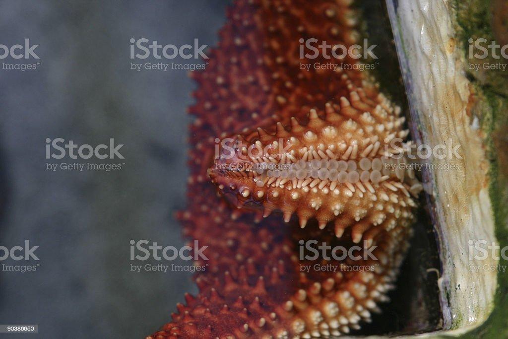 starfish moving royalty-free stock photo