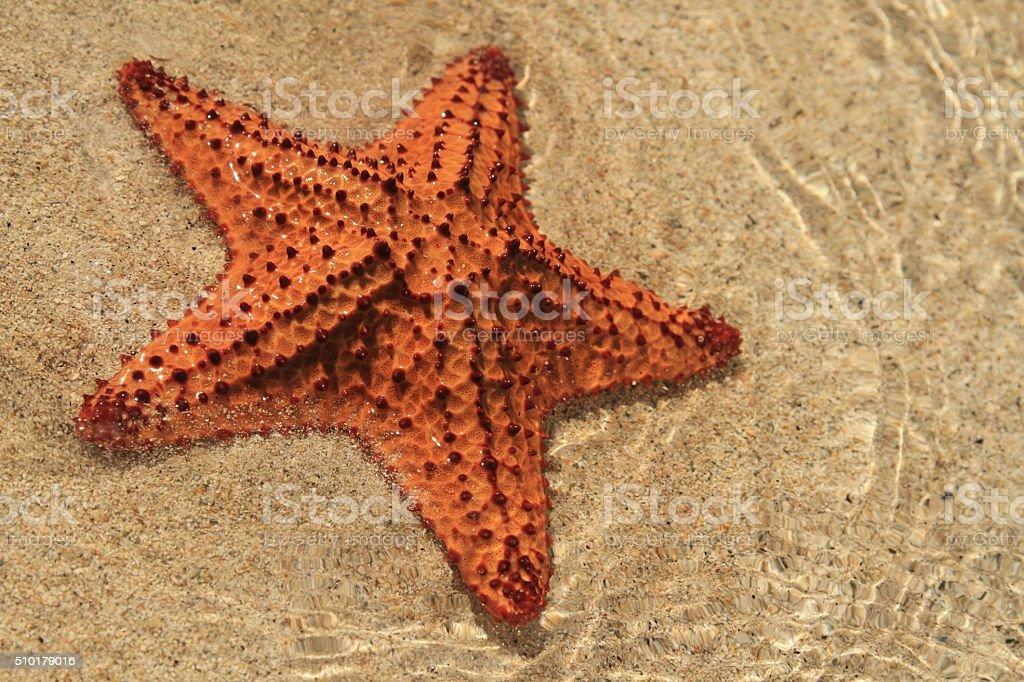 Starfish on a beach royalty-free stock photo
