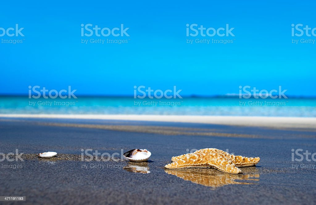 Starfish on a paradise beach in the country of Greece royalty-free stock photo