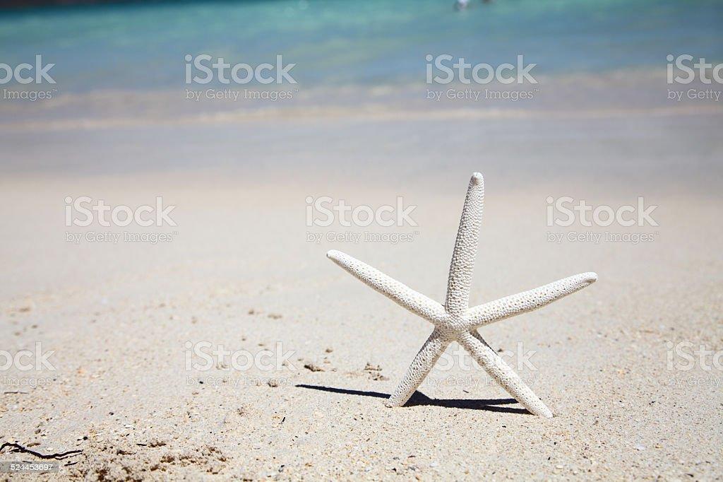 Starfish on a sandy beach stock photo