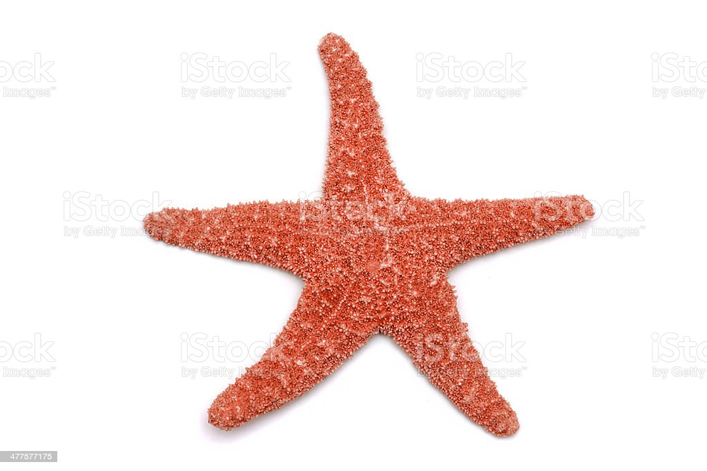 Starfish on a white background stock photo