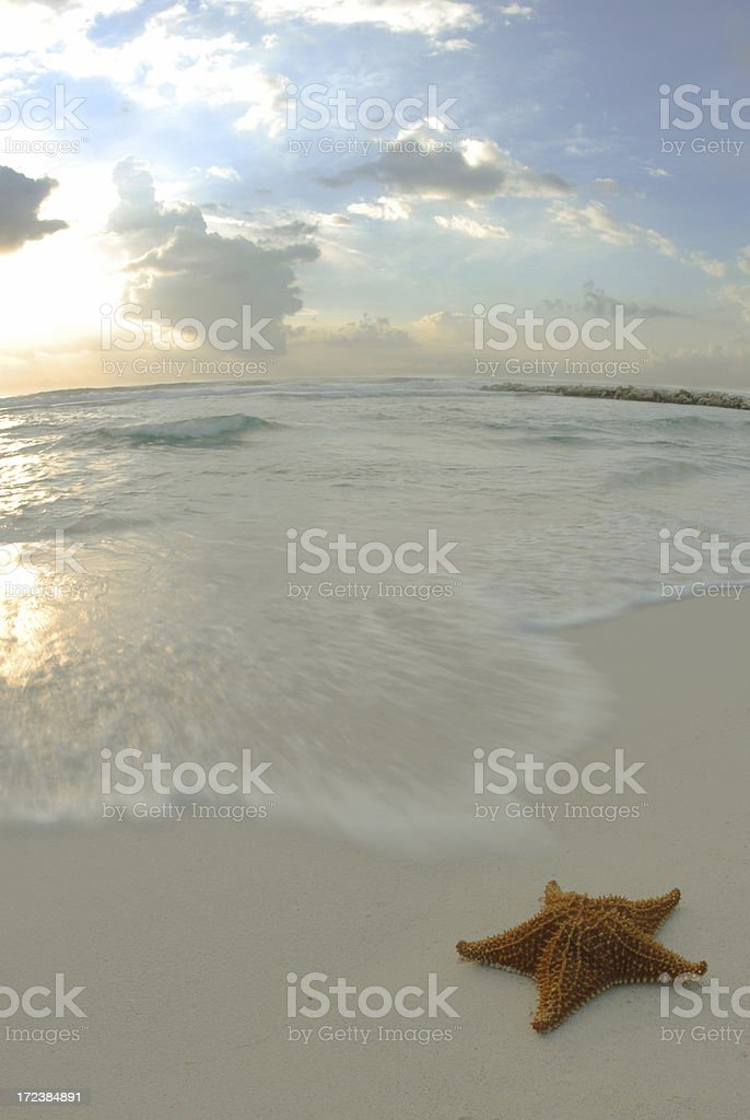 Starfish on Beach at Sunrise royalty-free stock photo