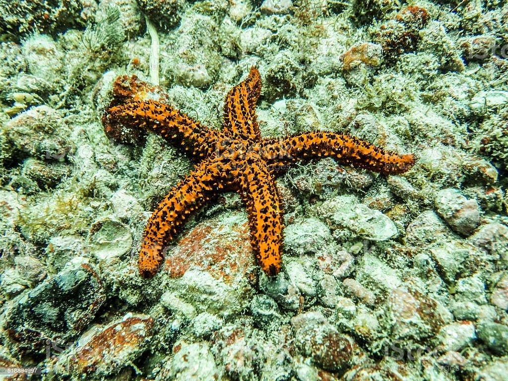 Starfish on Reef at Cabo Frio, Rio de Janeiro, Brazil stock photo