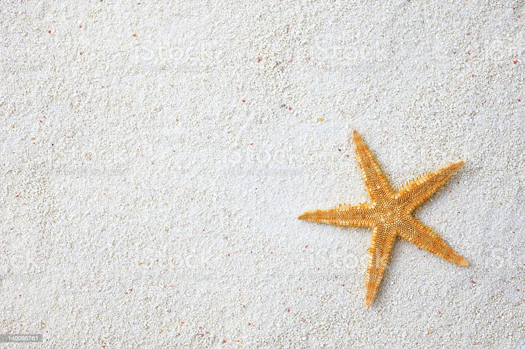 starfish on sand stock photo