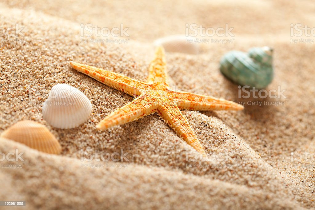 Starfish on sand royalty-free stock photo