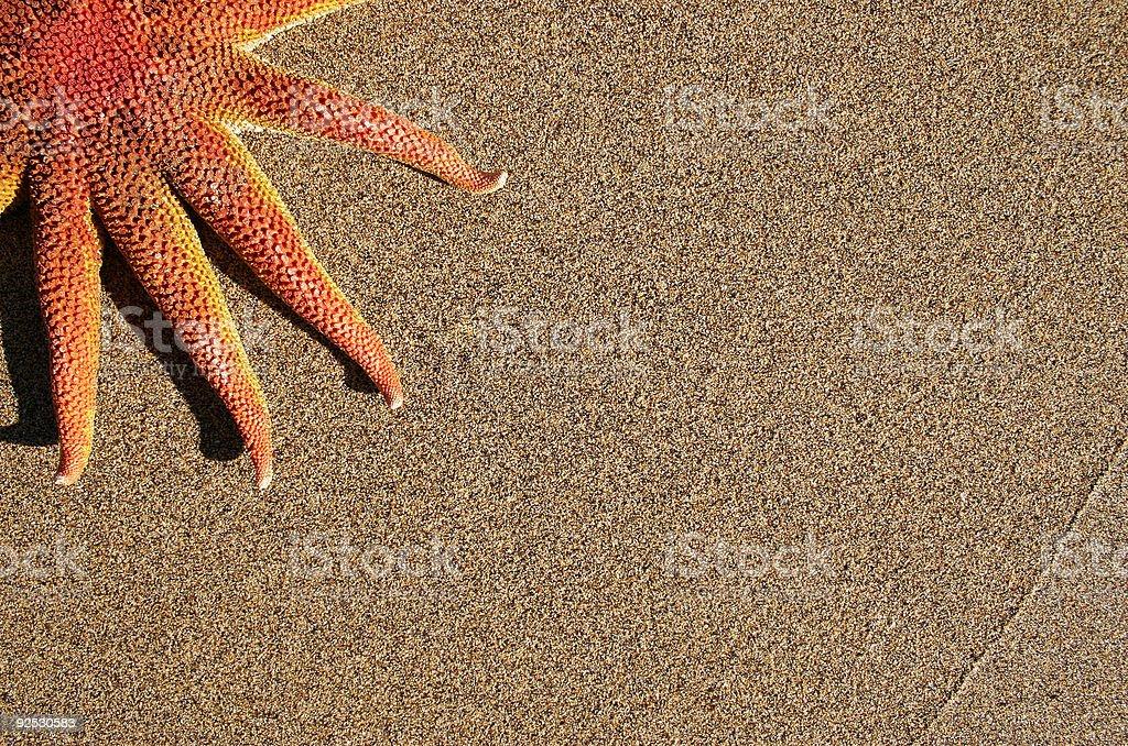 Starfish on Sand royalty-free stock photo