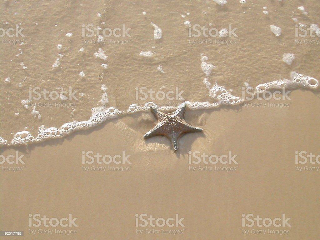 Starfish on shore royalty-free stock photo