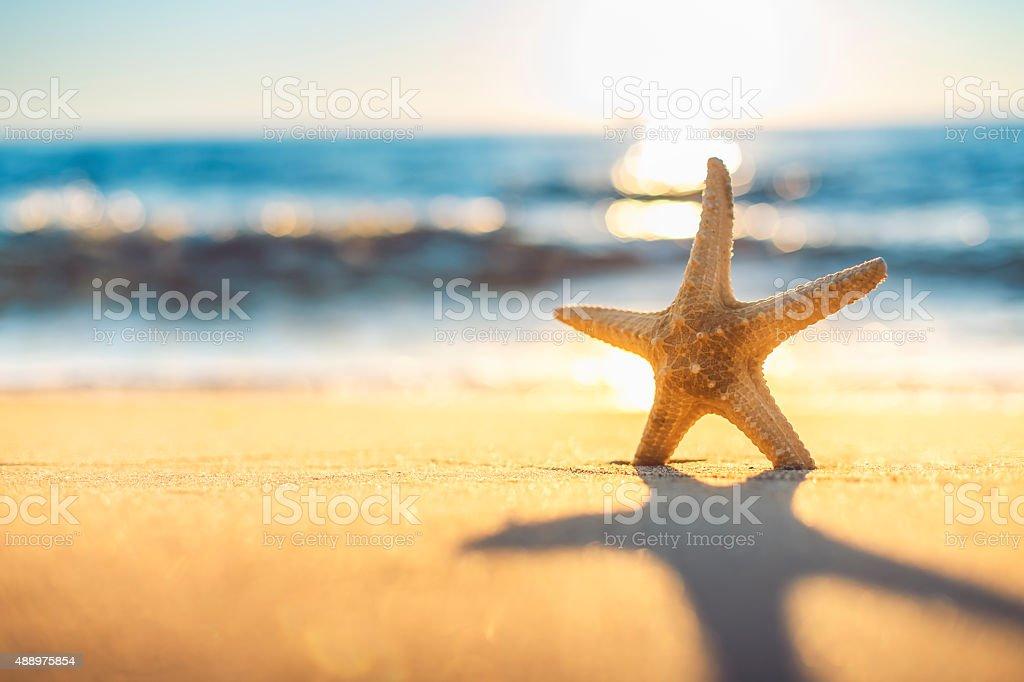Starfish on the beach at sunrise stock photo