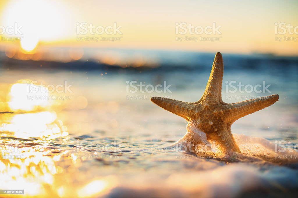 Starfish on the beach at sunrise stock photo