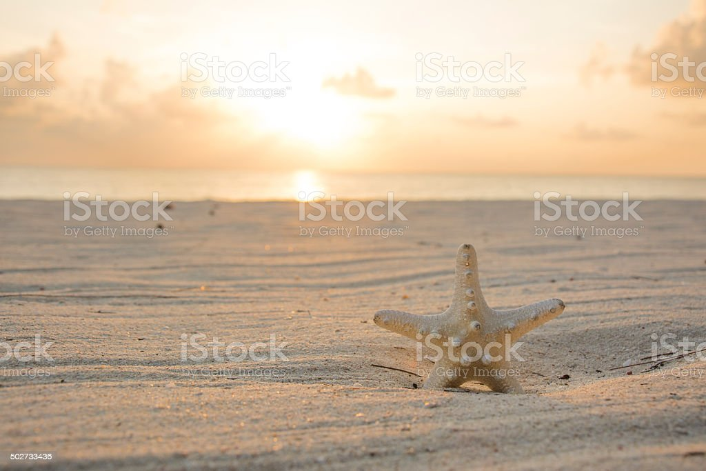 Starfish on the beach at sunset. stock photo