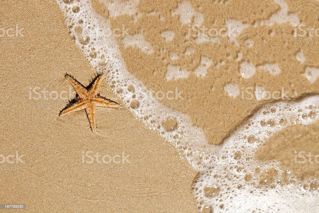 starfish on the beach royalty-free stock photo