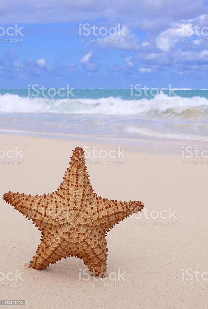 Starfish on the beach. royalty-free stock photo