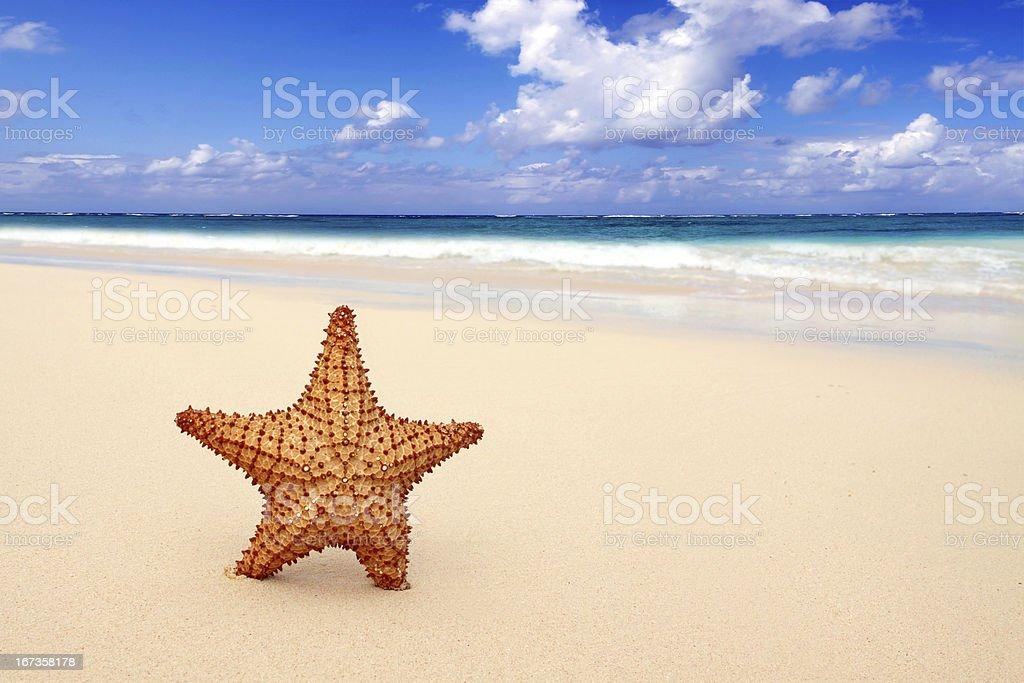 Starfish on the beach. royalty-free stock photo