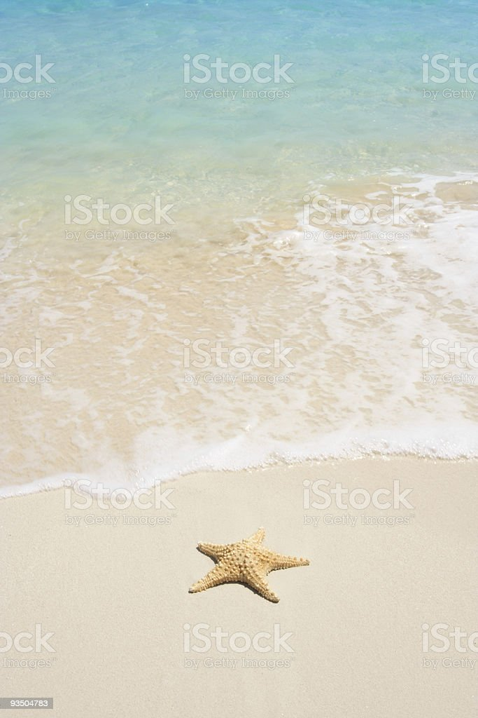 Starfish on The Beach royalty-free stock photo