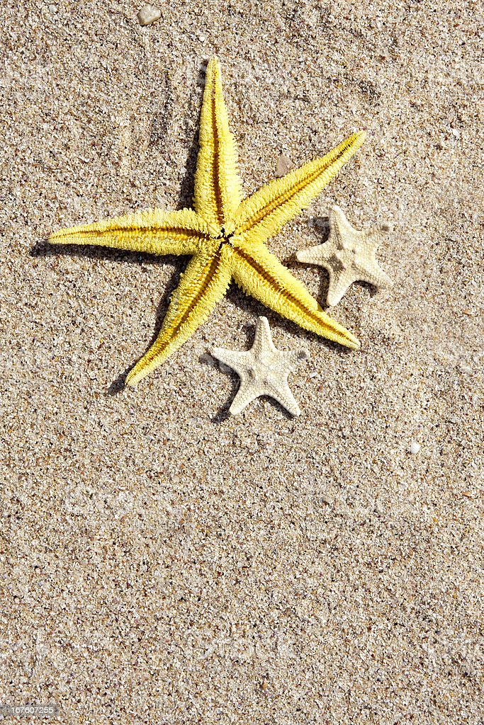 starfish on the beach sand royalty-free stock photo