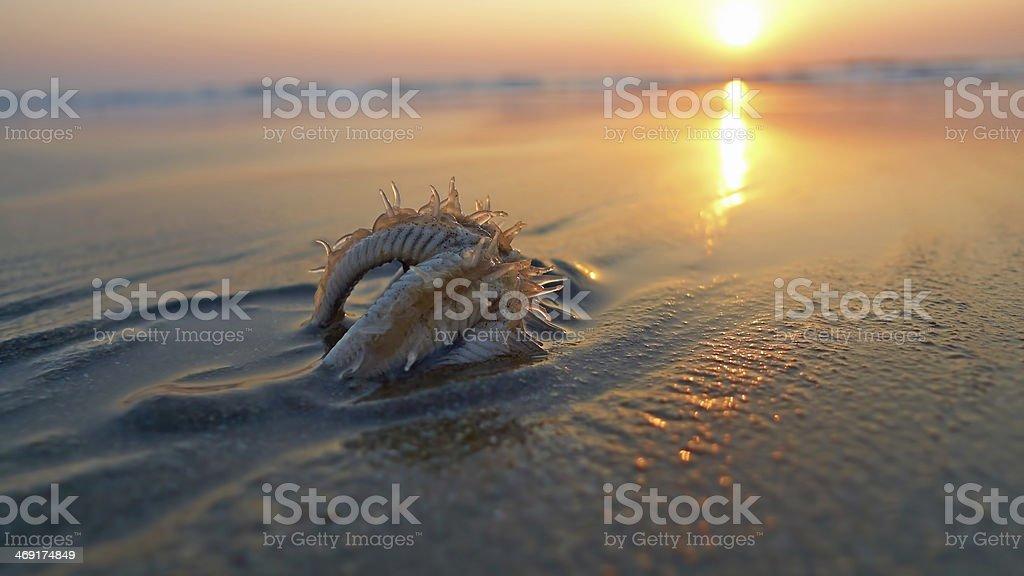 Starfish on the beach. Sunset, backlight. stock photo