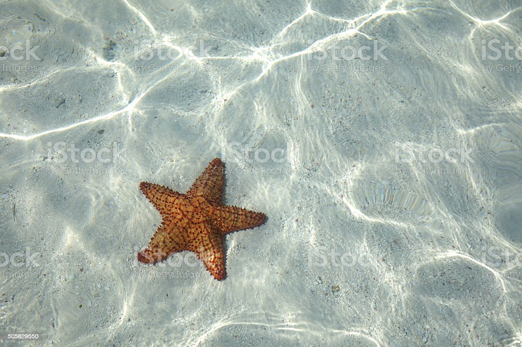 Starfish on the bottom stock photo