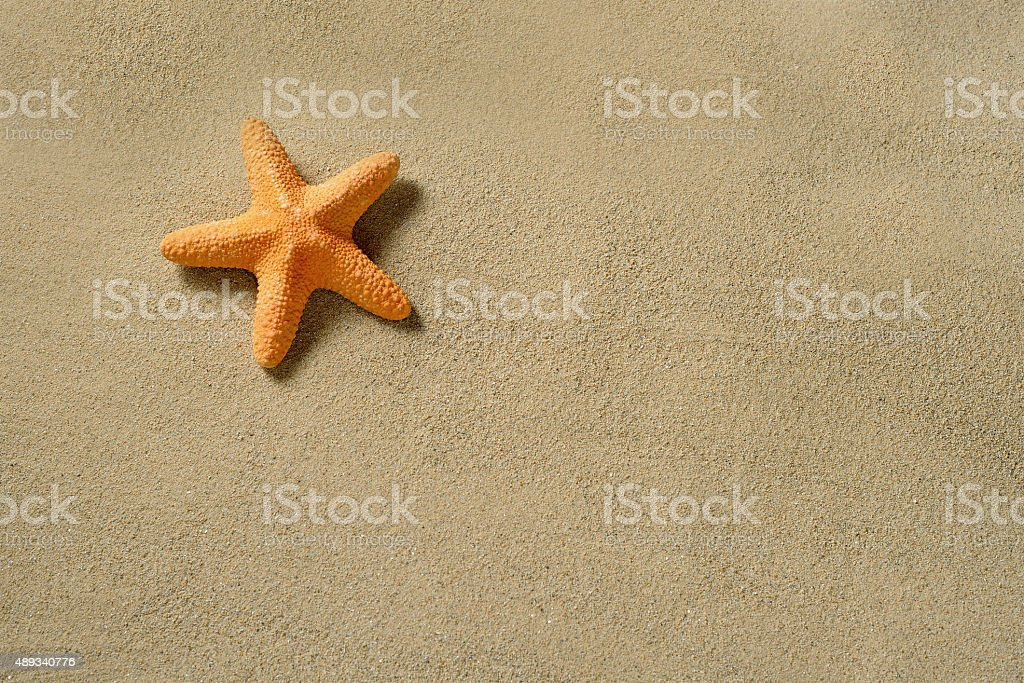 Starfish on the sandy beach stock photo