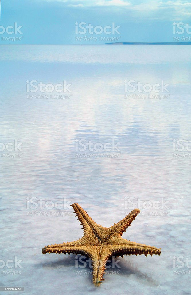 starfish on the water royalty-free stock photo
