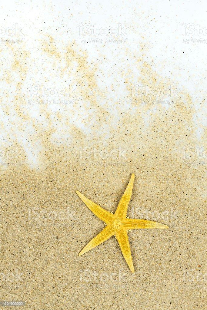 Starfish on the yellow sand royalty-free stock photo