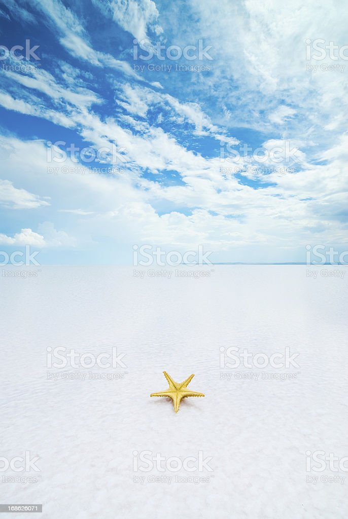 Starfish on tropical sand royalty-free stock photo