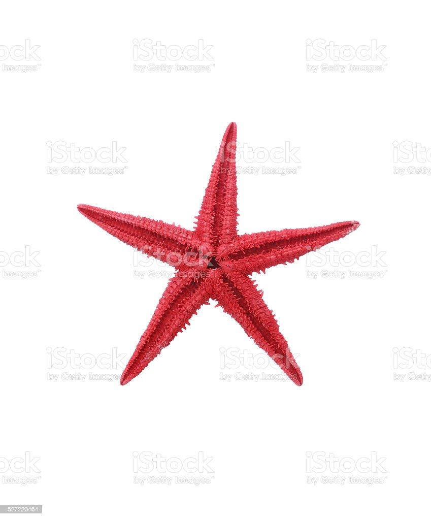 Starfish On White stock photo