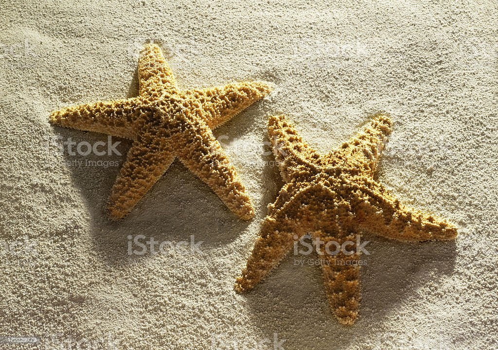 Starfish Pair royalty-free stock photo