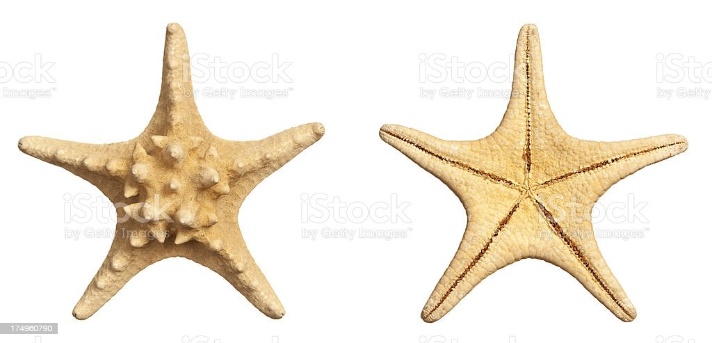 Starfish. stock photo