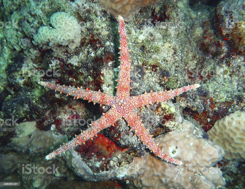 Starfish. stock photo