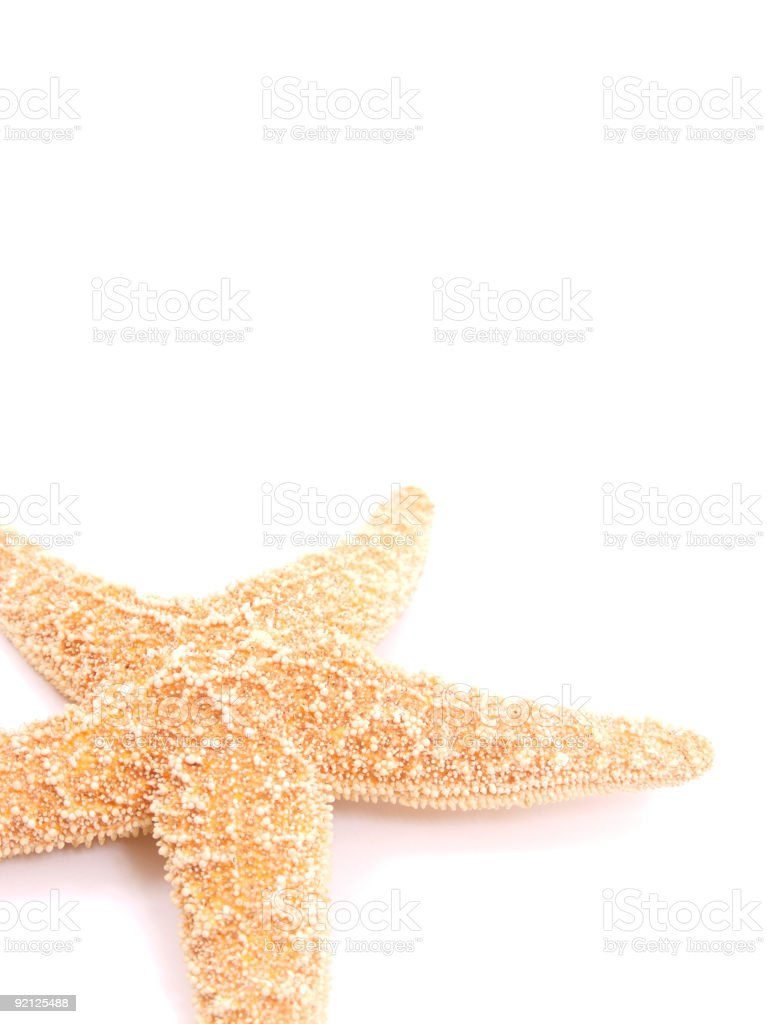StarFish royalty-free stock photo