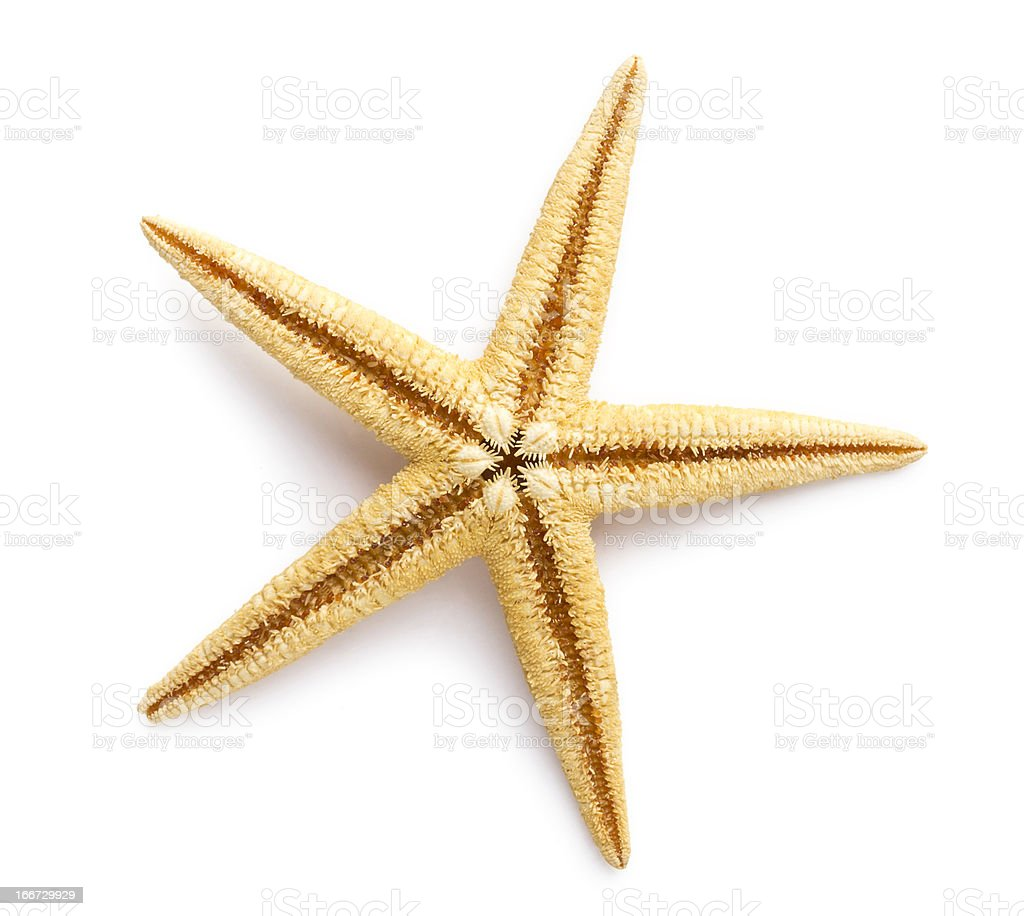 Starfish, Sea stars and shells. royalty-free stock photo