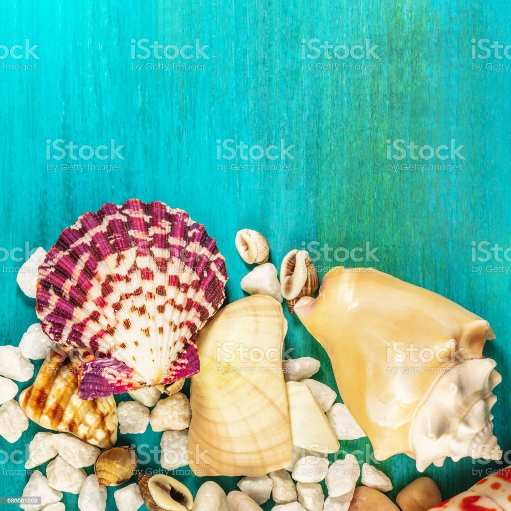 Starfish, shells, and pebbles on vibrant turquoise background stock photo
