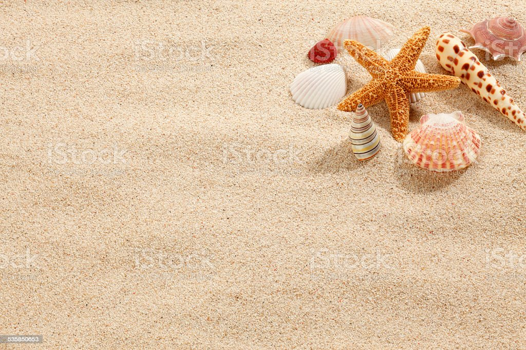 Starfish & Shells on Beach Sand stock photo