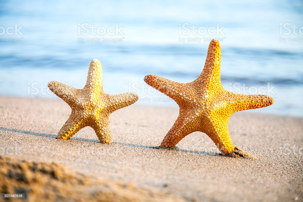 Starfish coule stock photo