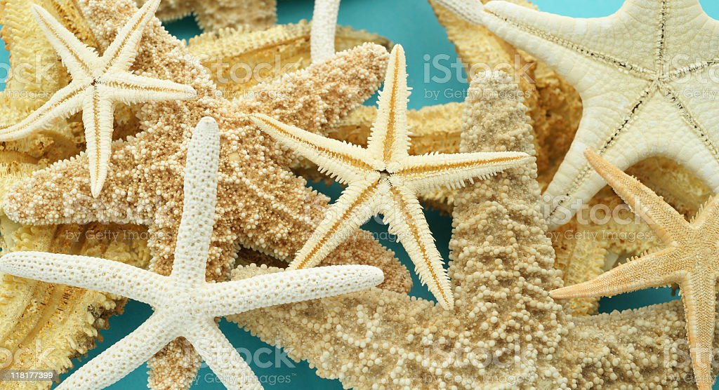 Starfish Souvenirs Series royalty-free stock photo
