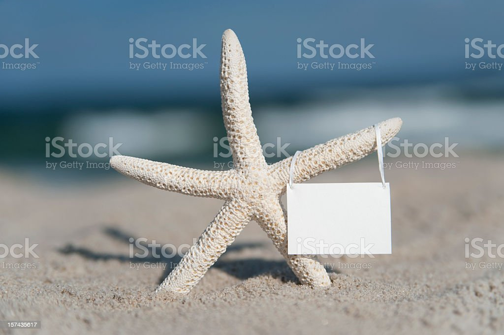 Starfish Starlet Holds Blank Sign royalty-free stock photo
