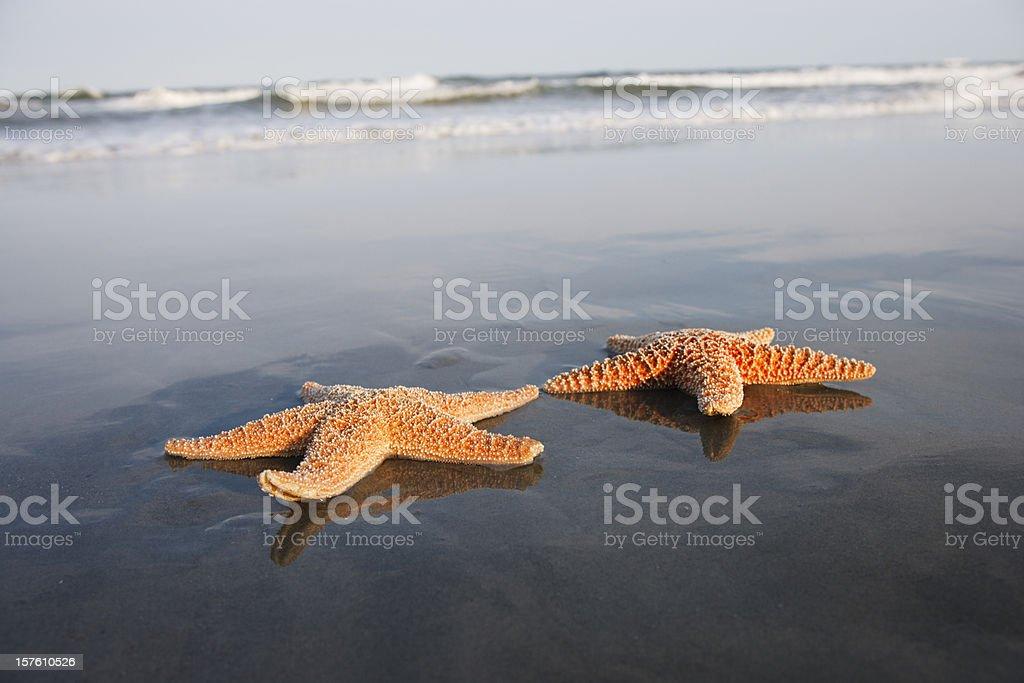 Starfish sunbathing at the beach stock photo