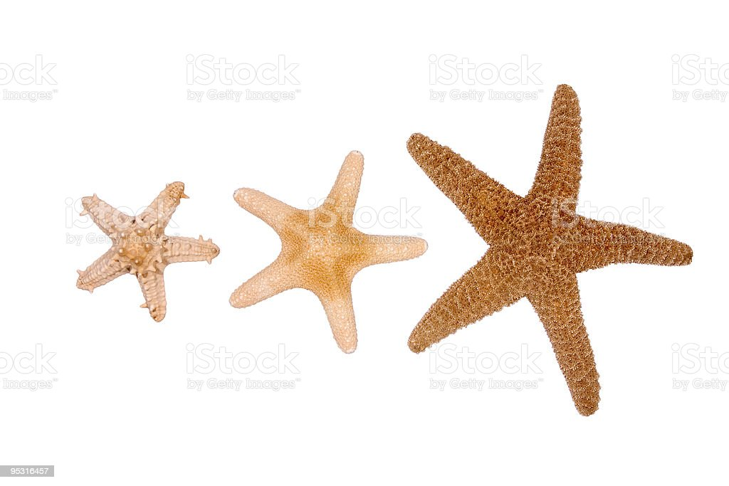 Starfish threesome stock photo