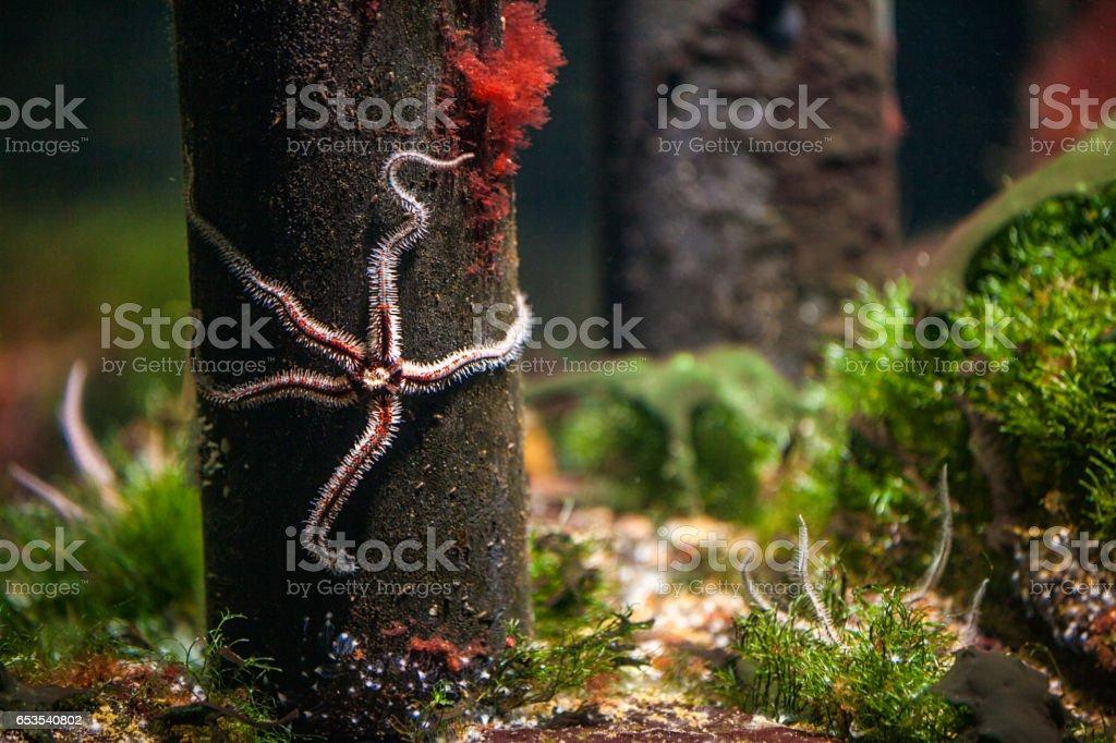 Starfish Underwater stock photo